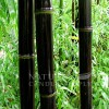 Black Bamboo and Lily Candle Fragrance Oil