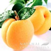 Apricot & Aprilia Type* Candle Fragrance Oil