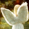 Angel Wings Candle Fragrance Oil